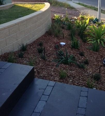 A suburban rain garden