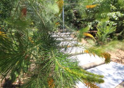Mt Colah Garden