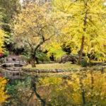 Leaf Peeping Dandenong